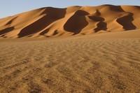 31_desert_11.JPG