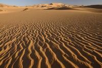 31_desert_15.JPG