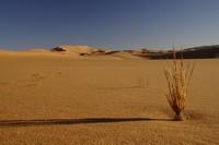 31_desert_16.JPG