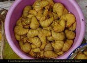 Birma_08.JPG